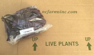 Unrooted Cuttings Bagged and Ready to Ship