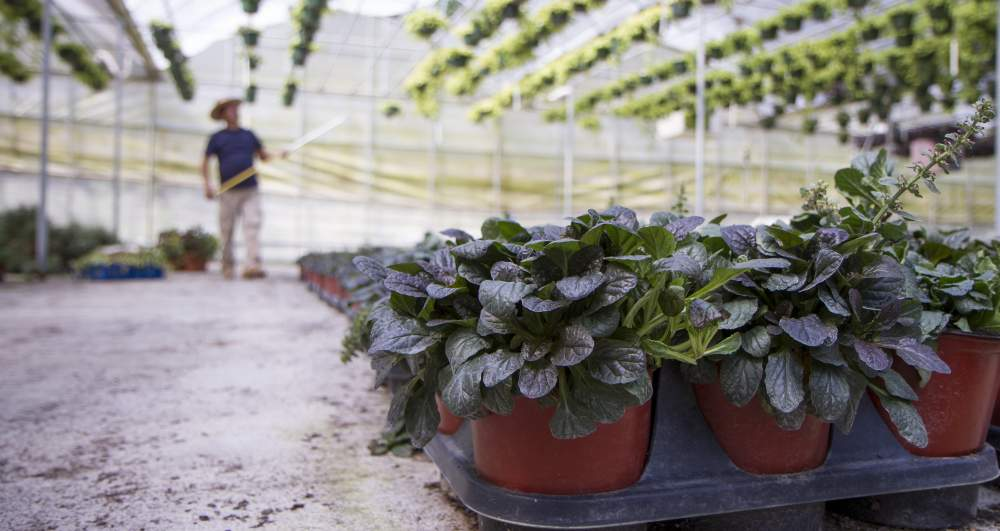 Stock Pots in the Greenhouse
