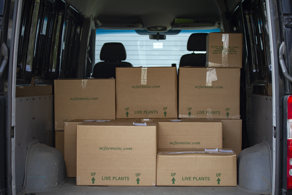 Boxes of Plants for Shipment