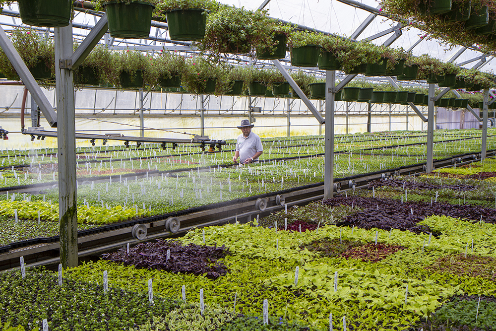 Grower Checking Starters