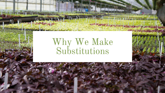 Image for Why We Make Substitutions