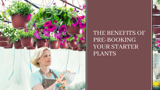 Image for The Benefits of Pre-Booking Your Starter Plants
