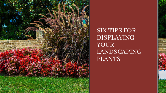 Image for Six Tips for Displaying your Landscaping Plants