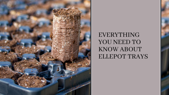 Image for Everything You Need to Know About Ellepot Trays