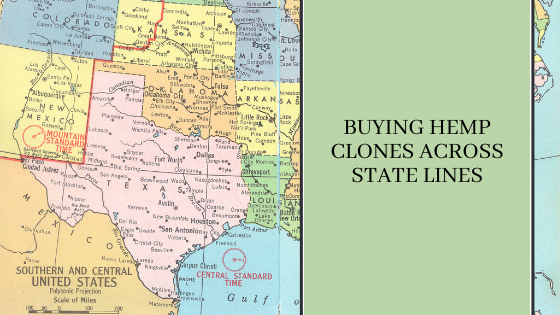 Image for Buying Hemp Clones Across State Lines