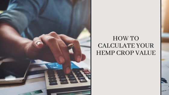 Image for How to Calculate Your Hemp Crop Value