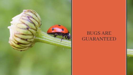 Image for Bugs are Guaranteed