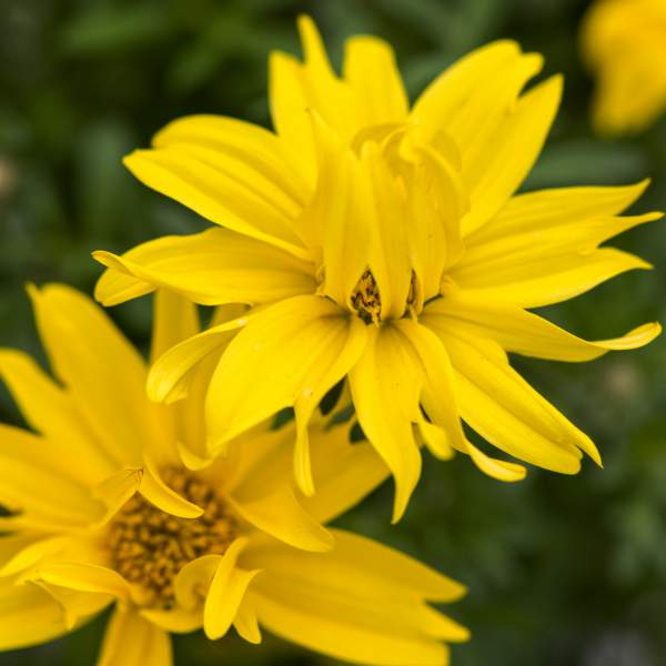 Image Of Bidens Giant Double