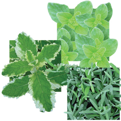 Image Of Herb Assorted