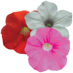 Image Of Petunia Trailing Assorted