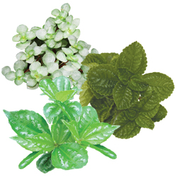 Image Of Pilea Assorted