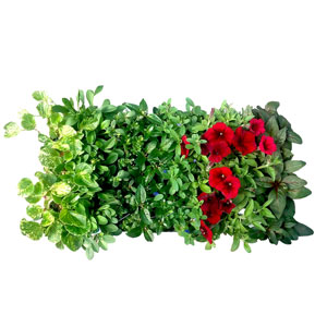 Super Assorted Foliage 7 Colors - Rooted Cutting Liner
