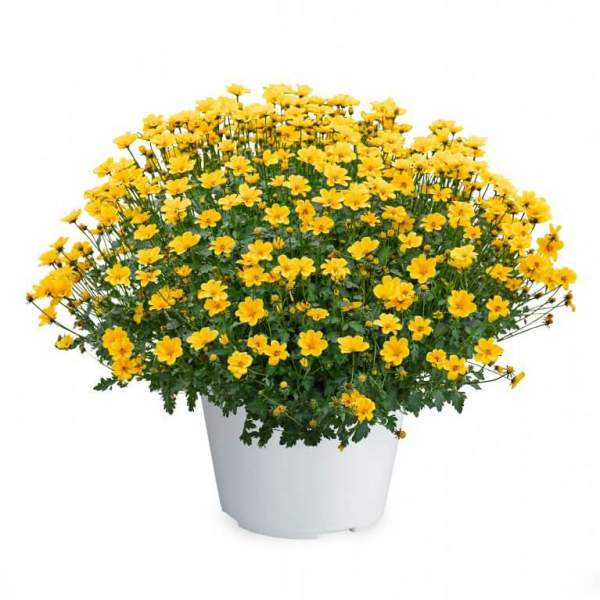 Image Of Bidens Golden Empire